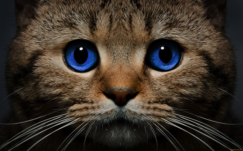 зажигает про кошек с картинками сша